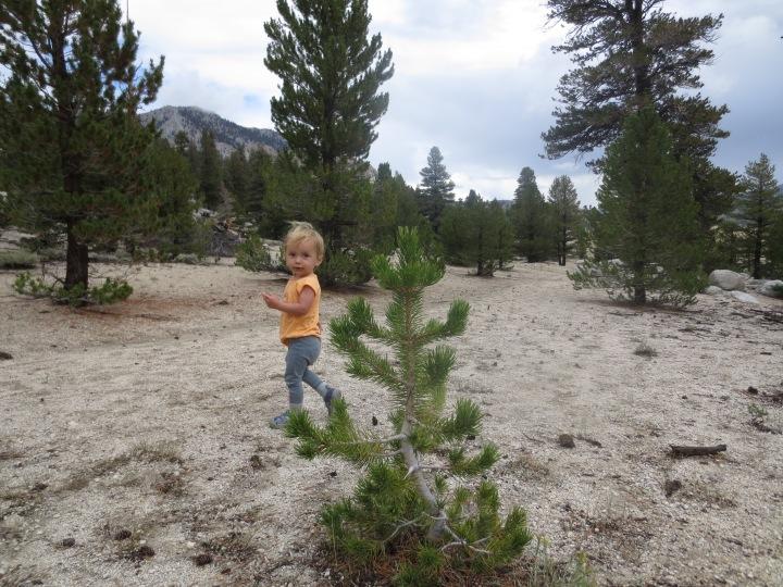 A Sage sized tree