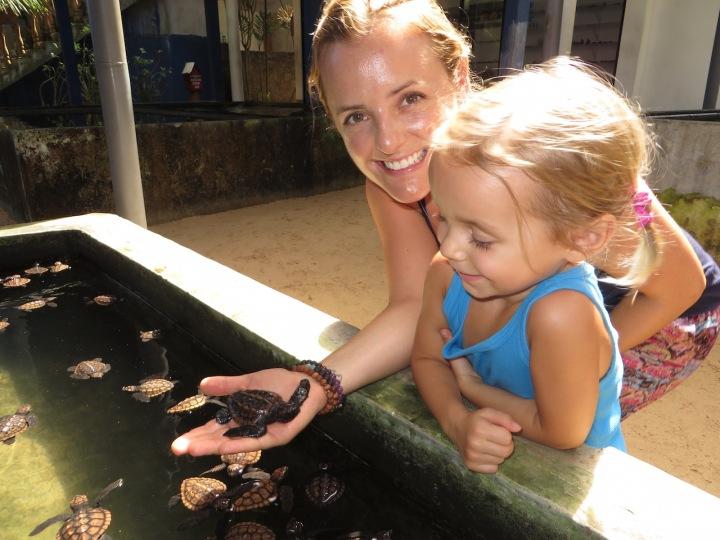 Animal Encounters: SeaTurtles