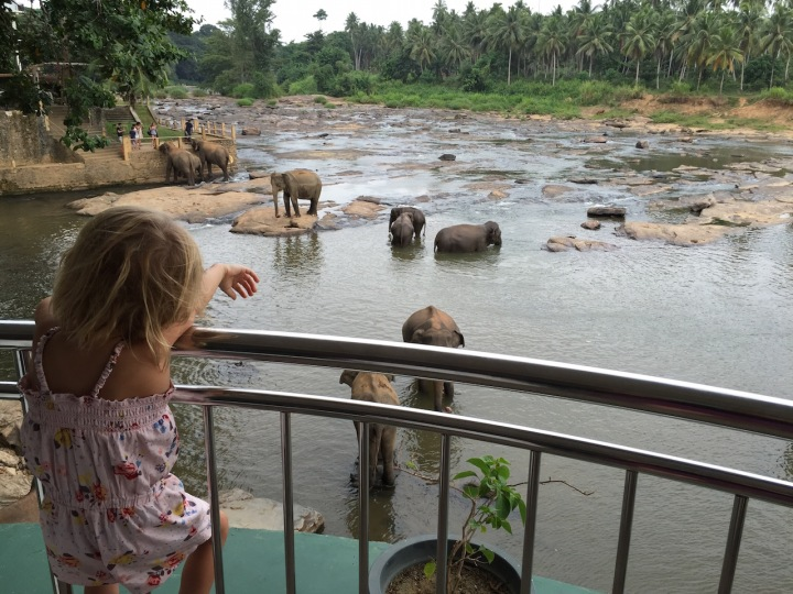 An Afternoon with the Elephants